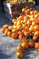 Pumpkins sm